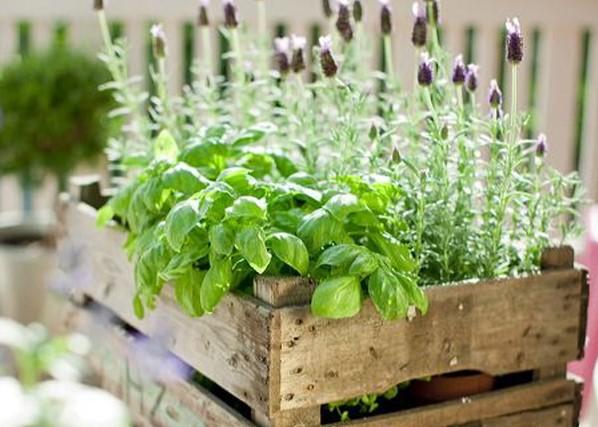 L'orto sul balcone: frutti e ortaggi a KM 0